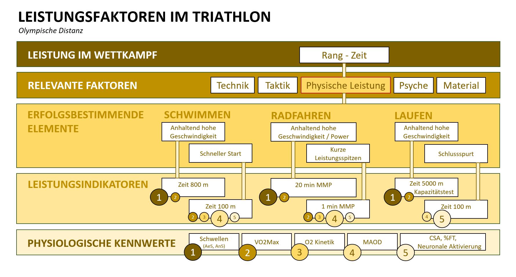 Grafik: Details der Leistungsfaktoren im Triathlon für die Olympische Distanz.