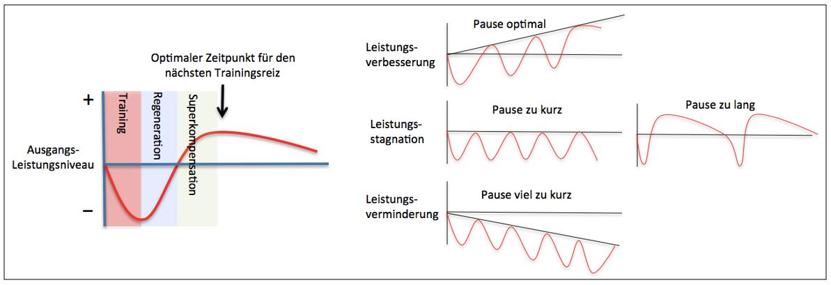 Grafik: Analyse Verhältnis von Belastung und Erholung als Grundlage zur Trainingsplanung.