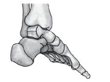 Fussgymnastik: Ein anatomisches Meisterwerk 2