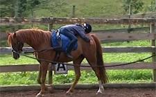 G+S-Kids – Sport equestri: Lezione 5 «Introduzione alla cavezza lunga»