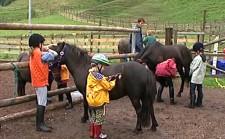 G+S-Kids – Sport equestri: Lezione 7 «Gioco di postazioni sul tema foraggio»