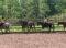 G+S-Kids – Sport equestri: Lezione 8 «Visita di una scuderia»