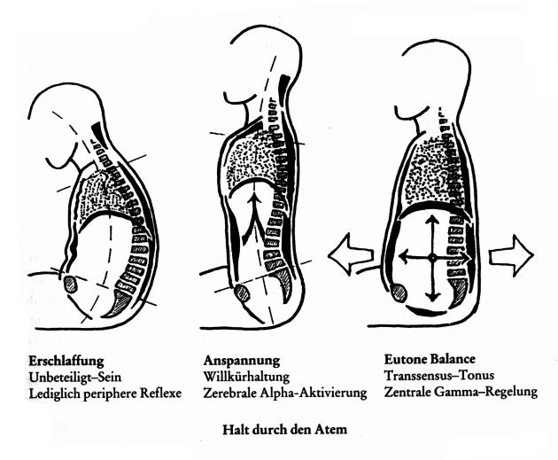Grafik mit Erklärung Spannung - Entspannung im Körper.
