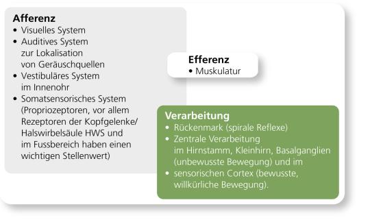 Grafik: Die beteiligten Organsysteme beim Sensomotorischen Training.