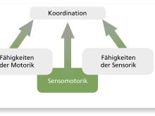 Sensomotorisches Training: Was ist Sensomotorik?