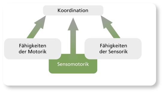 Grafik: Zusammenhänge der Sensomotorik.