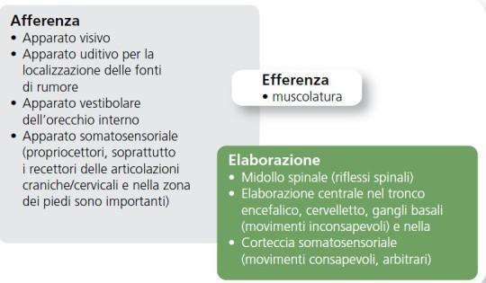 Tabella: i sistemi di organi coinvolti nell'allenamento sensomotorio