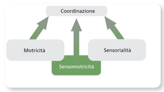 Tabella: sistema sensomotorio