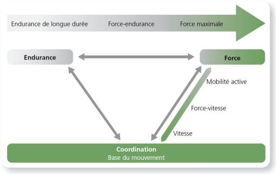 Figure: Le mouvement est une performance coordinative du système sensori-moteur.
