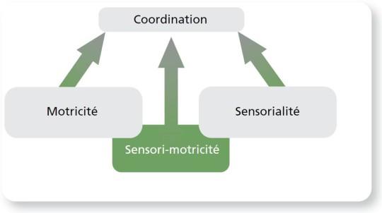 Figure: Système sensori-moteur
