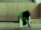 Freestylesport – Breakdance: Footworks – Three-Step