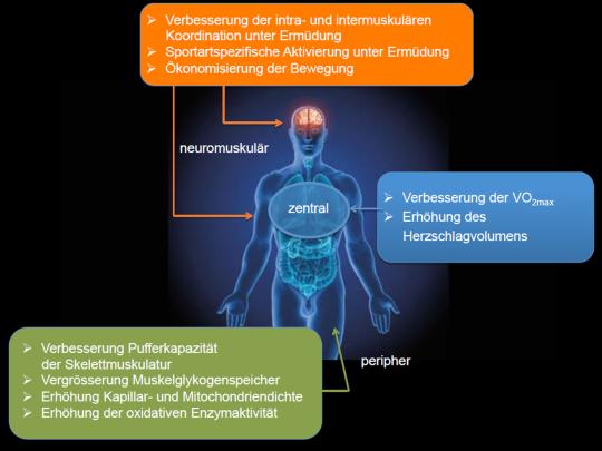 Grafik: Auswirkungen auf die verschiedenen Systeme des Körpers.