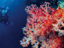 Plongée sous-marine: A vous le grand bleu!