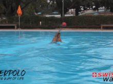 Wasserball: Passübungen